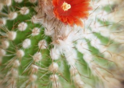 cactusflower